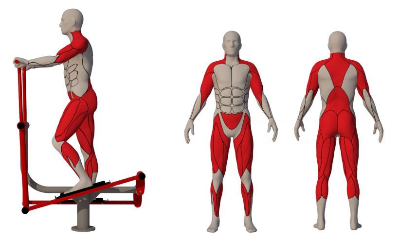 какие мышцы работают на орбитреке