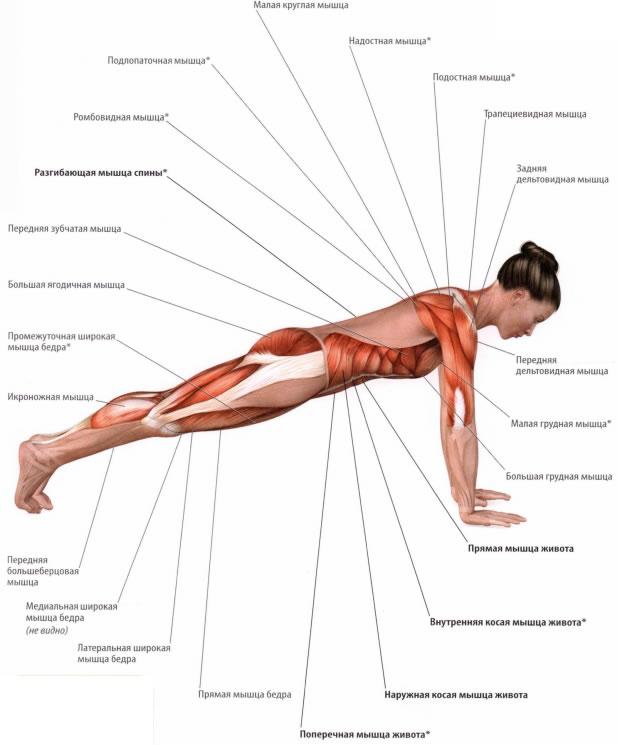 планка мышцы